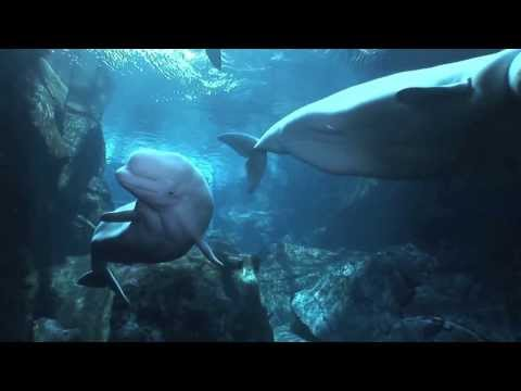 Singing in the Ocean Deeps - Stanton Lanier