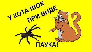 У кота ШОК при виде паука!/The cat has a shock at the sight of a toy spider!