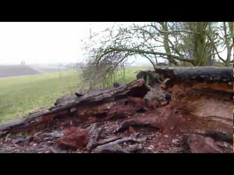 Poem Tree at Wittenham Clumps Is Dead