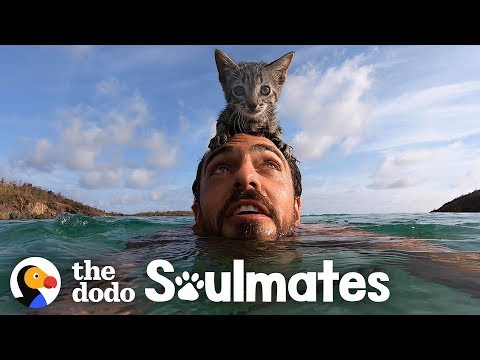5WeekOld Kitten Loves Swimming With Her Dad | The Dodo Soulmates