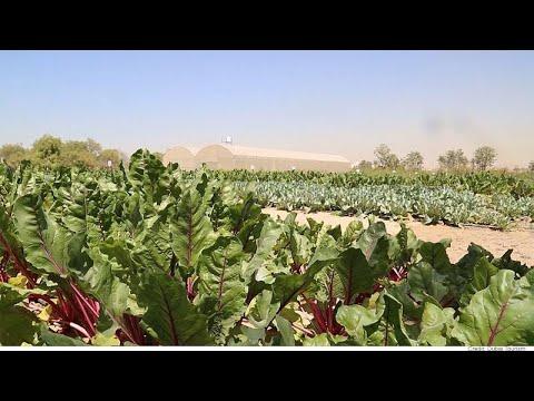 Agricultura resistente al cambio climático, el futuro del cultivo está en Dubai