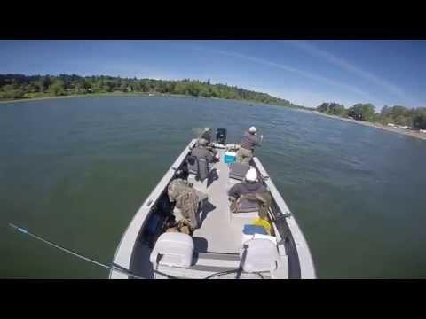 Willamette river salmon fishing