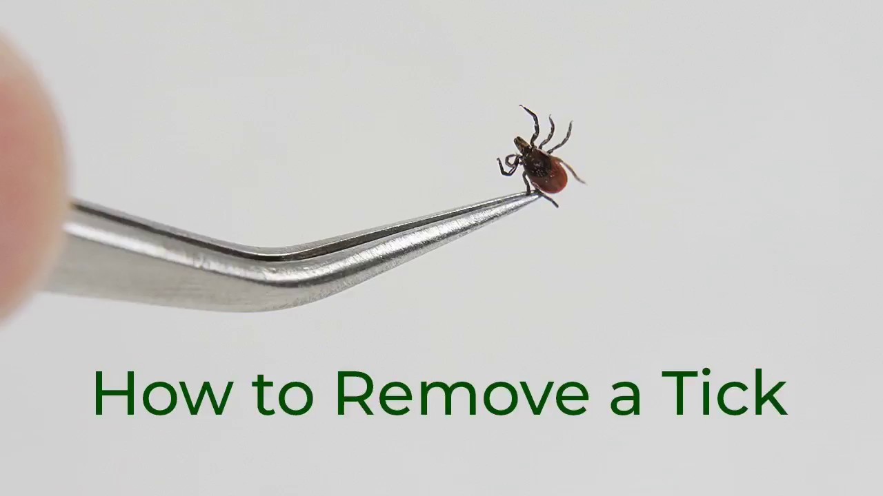 HOW TO REMOVE A TICK – TickEase Australia
