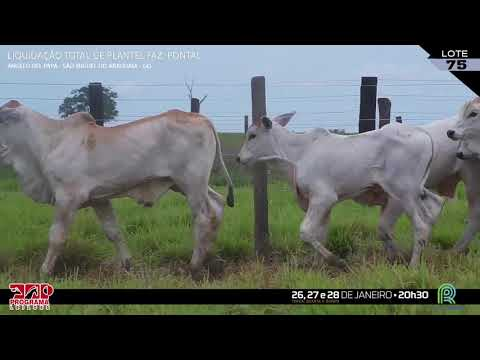 LOTE 075