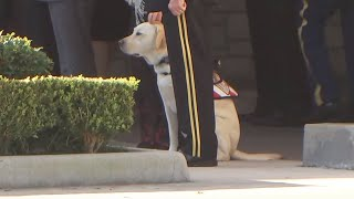 President Bush's service dog 'Sully Bush' at funeral home as casket departs