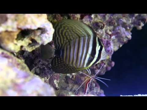 My Sailfin Tang Loves To Get A Little