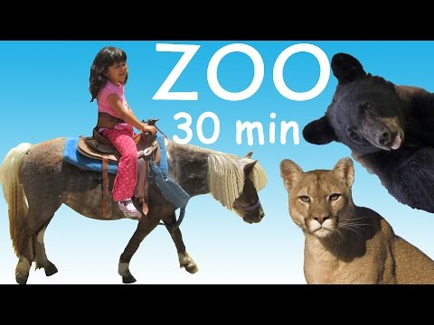 ZOO Petting ZOO Feeding Animals Learn Animals Names Long Video for Kids