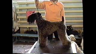 Международная выставка собак, Кемерово,  1997 г.