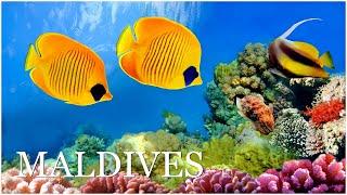 Мальдивские острова. Подводный мир Индийского океана