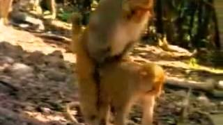 funny video about difference sexual relations between human and animal