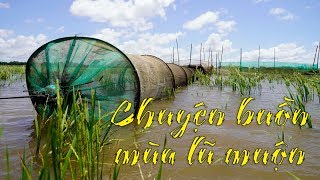 Những chuyện buồn của mùa lũ muộn 2019 ở miền Tây. KHÔNG CÓ MỘT CON CÁ LINH!