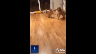 CUTENESS OVERLOAD - DOGS AND CATS BEING FUNNY AND HILARIOUS [VIDEO COMPILATION]