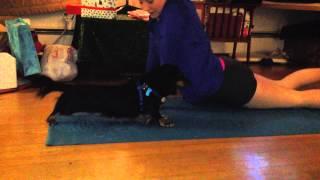 Downwarddog Yoga
