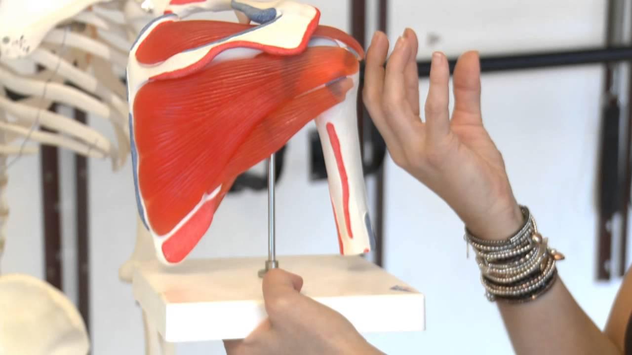 Rotator Cuff Anatomy Tutorial for BarreConcept - YouTube