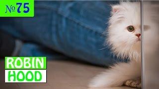 ПРИКОЛЫ 2017 с животными. Смешные Коты, Собаки, Попугаи // Funny Dogs Cats Compilation. Апрель №75