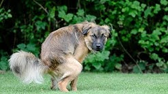 How to Stop Diarrhea in Dogs (Without a Trip to the Vet)
