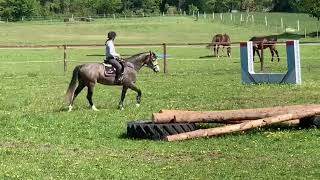 5 year old Holstein mare first time X-country schooling