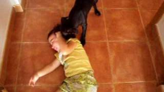 American Pit Bull Terrier, Sin Palabras...