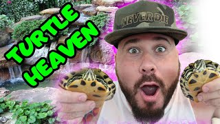 Building My New Turtles A Turtle Paradise (AMAZING!!!)