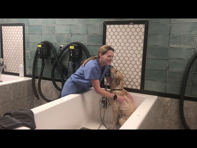Exceptional Pets Dr. Chiles Video2 Tips for Veterinarian Approved Paw Washing April 2020