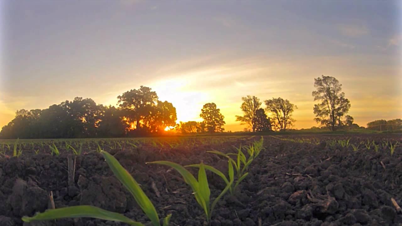 Early Corn Field Sunrise Time Lapse