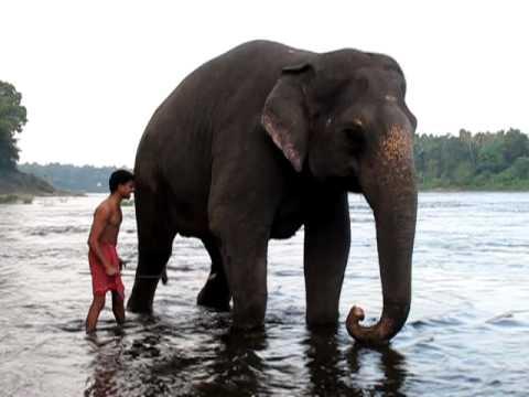 Indian Elephant Youtube