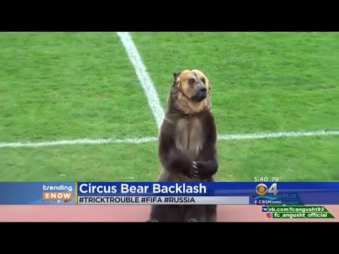 TRENDING: Some Upset After Circus Bear Used To Help Start Soccer Game In Russia
