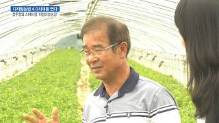 성주참외와 스마트팜의 만남…'아침이슬농장'을 가다