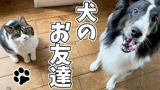 犬が大好きな息子猫🐈