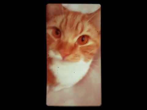Клички для кошек и и катов 😻😸😽😺