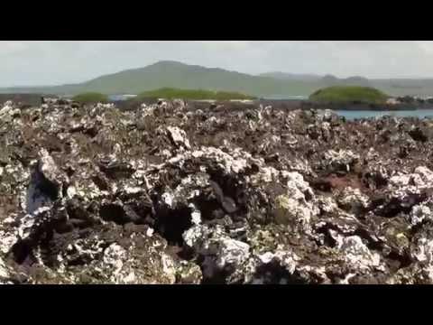 Что такое лишайники — Науколандия