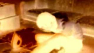 RIKVERC ... Opekao Sam Se Na Peglu (1989)
