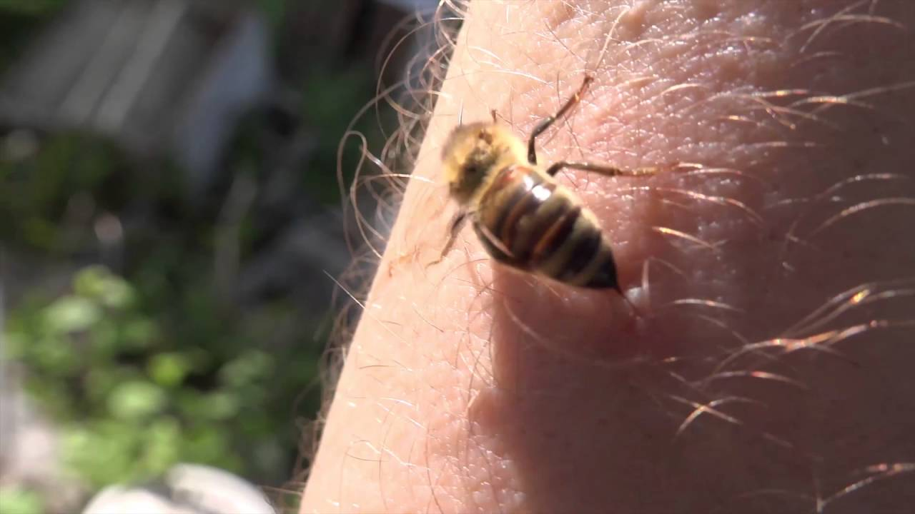 6 THINGS YOU DIDN'T KNOW ABOUT QUEEN BEES - Beekeeping Like