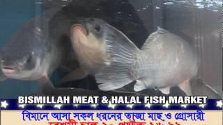 BISMILLAH LIVE POULTRY ADD IN  TV