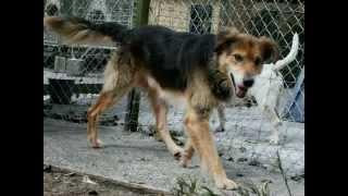 My Old Dog Rex  ,lonely Dog, Rspca Shelter Dog