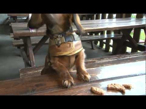 "NW32TV Presents ""Dog-Friendly Portland Spots"" with Gustav & Nik. J Miles"
