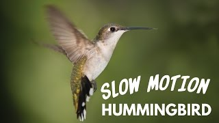 Slow Motion Hummingbird Footage | Canon 7D Test(Enroll in the 20+ Video Course Bundle for just $9: http://www.videoschoolonline.com/videobundle Here is some fun footage of hummingbirds right on my front ..., 2015-07-20T16:00:01.000Z)