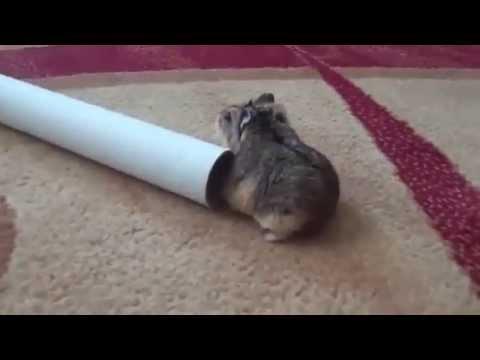 Con chuột đáng yêu