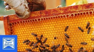 Honey Extraction   Stoned Mode