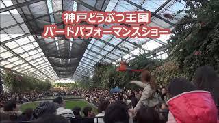 神戸どうぶつ王国 バードパフォーマンス.
