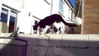 Cute Yorkshire Terrier Puppy Vs Black & White Cat