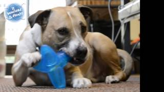 Petstages ORKA Tumbler Dog Chew Toy