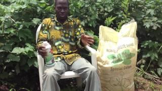 Vidéo 2 Essai engrais bio Vital Plus sur cotonnier à Teningoué Côte d'Ivoire