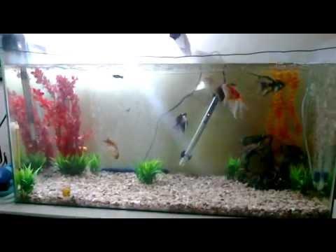 Pecera 150 litros acuario agua dulce peces agua fria y for Cuidados acuario agua fria