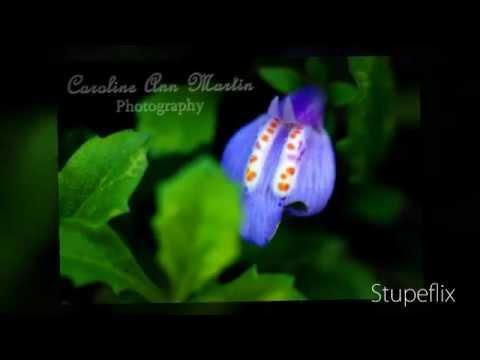 Macro Photography & Flowers - short slide show - Caroline Ann Martin Photography