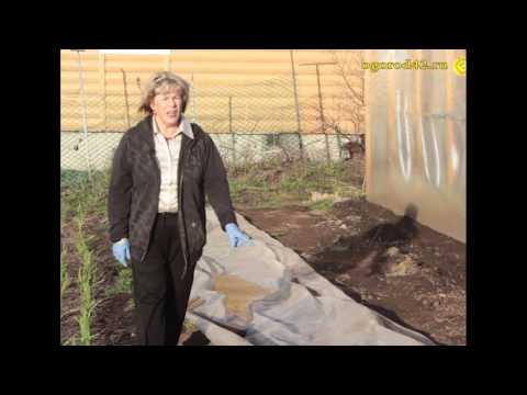 Как спасти рассаду от заморозка?