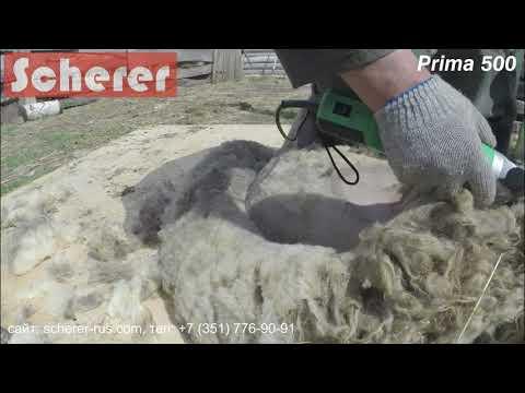 "Scherer Prima 500 (Шерер Прима 500) Стрижка барана ""домашней"" породы. Sheep Shearing Machine."