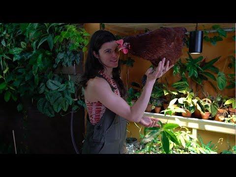 Ep 054: Grow Lights for Houseplants - Plant One On Me