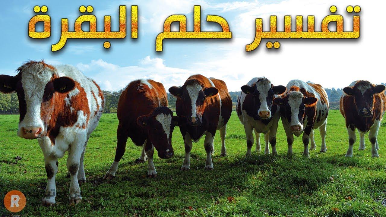 تفسير حلم البقرة ? - ما معنى رؤية البقرة في الحلم ؟ - سلسلة تفسير الأحلام