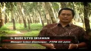 "Video ""PTPN XII Kebun Glantangan"" produksi karet (Liputan) download MP3, 3GP, MP4, WEBM, AVI, FLV September 2018"